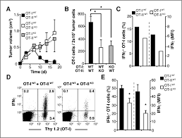 maximal t cell u2013mediated antitumor responses rely upon ccr5