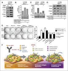 Collagen Signaling Enhances Tumor Progression After Anti Vegf
