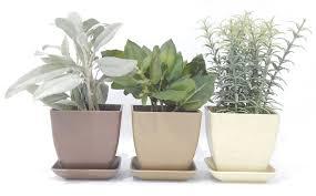herb kits urban farmer