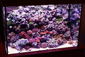 Reef Aquarium Lighting The Definitive Guide To Aquarium Lighting Home Aquaria