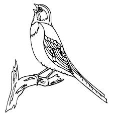 bird singing coloring color luna