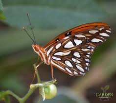 a weekend surprise butterfly hatching