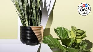 the best houseplants that even you can u0027t kill gq