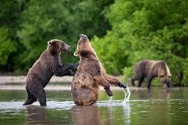 imagenes de animales y cosas osos fotografiados haciendo cosas de humanos bastísimo