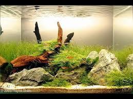87 besten aquarium bilder auf pinterest schöne fische eingang