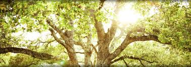 nevada city tree service grass valley placer county foothills