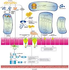 microorganisms free full text metabolic interactions in the
