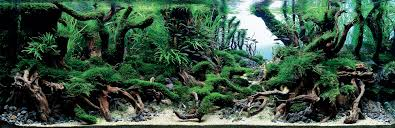Aquascape Aquarium Plants The Surreal Submarine World Of Aquascaping Amuse