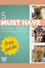 277 best for vet tech superstars images on pinterest veterinary
