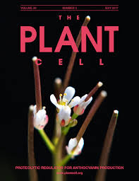 218 best native plants images on p a two step model for de novo activation of wuschel during plant