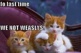 Lol Cat Meme - funny lol cat meme 3