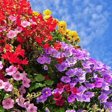 balcony flower box images u0026 stock pictures royalty free balcony