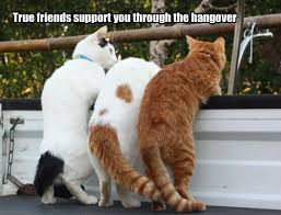 Funny Memes About Friends - true friends support through hangover funny meme funny memes