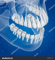 vire teeth transparent tooth the best tooth 2018