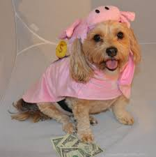 halloween costumes for yorkies dogs save money this halloween re purpose an old costume