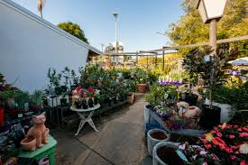native plant nursery adelaide cottage garden nursery