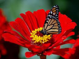 butterfly flowers prograde landscaping butterfly gardens oviedo