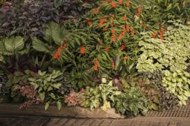 Tropical Plants Pictures - tropical shade garden plants tips on creating a tropical shade garden
