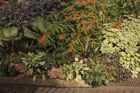 Shady Garden Ideas Tropical Shade Garden Plants Tips On Creating A Tropical Shade Garden