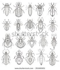 greeting card bug ornamental insect vector stock vector 510465586