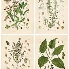 herb chart shop herb wall art on wanelo