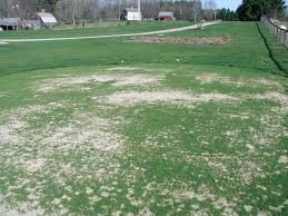 putting green construction manual news page