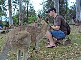 Six Flags Coupon Book Lone Pine Koala Sanctuary Coupon Code Cymax Coupon Codes 2018