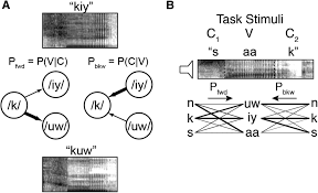 dynamic encoding of speech sequence probability in human temporal