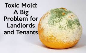 Types Of Mold In Bathroom by Toxic Mold A Big Problem For Landlords And Tenants Rentprep
