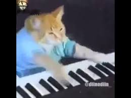 Cat Playing Piano Meme - cat playing piano and raps youtube
