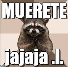 Raccoon Meme - m memegen com ogi423 jpg
