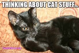 Thinking Cat Meme - thinking about cat stuff funny cat memes