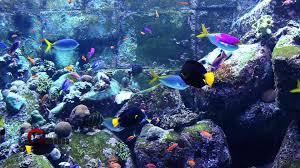 aquarium royalty free stock footage hd 1080p youtube