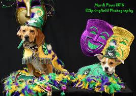 mardi gras dog mardi gras custom made dog costumes mg04