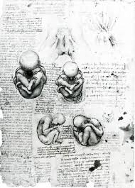 leonardo drawings a study of anatomy from the