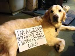 Golden Retriever Meme - 19 of the very best golden retriever memes american kennel club