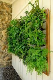 17 best fern walls vertical garden ideas images on pinterest