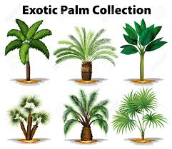 different types of trees different types of exotic palm trees illustration royalty free