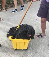 dog owner dresses her hungarian puli pooch as a mop for halloween