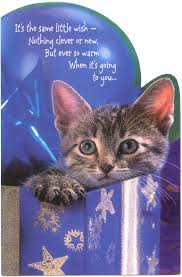 cute cat happy birthday wishes pictures litle pups