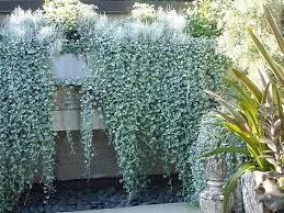 kletterpflanzen fã r balkon 306 besten gartengestaltung bilder auf balkon