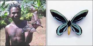 9 largest insects on earth care2 healthy living