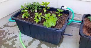Diy Self Watering Herb Garden Diy Self Watering Container Garden Sia Magazine