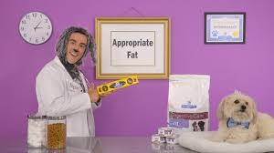 hill u0027s prescription diet digestive care dog food youtube