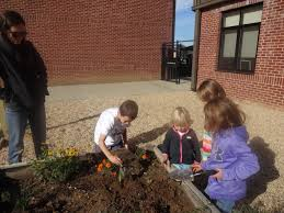 octoraro native plant nursery cecil watershed stewards academy clean cecil waters for a