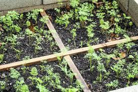 vegetable gardens for beginners u2013 satuska co