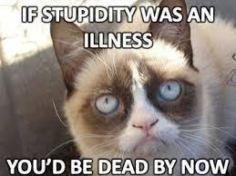 Funny Grumpy Cat Meme - grumpy cat clipart quote pencil and in color grumpy cat clipart quote