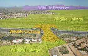 tucson native plants oracle road wildlife crossing finishing touches the volunteer