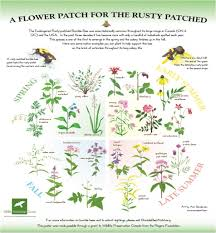 native plant seeds for sale resources for bee friendly farmers and gardeners www seeds ca