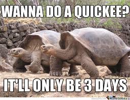 Tortoise Meme - tortoise wants coitus by jdun meme center